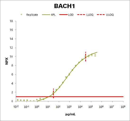 Transcription regulator protein BACH1 (BACH1)