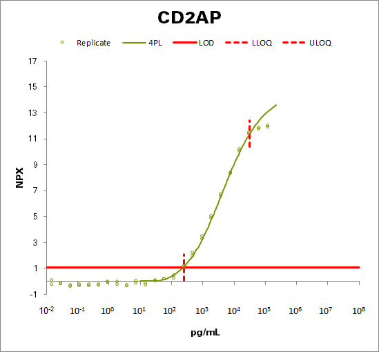 CD2-associated protein (CD2AP)