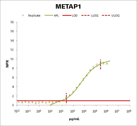 Methionine aminopeptidase 1 (METAP1)