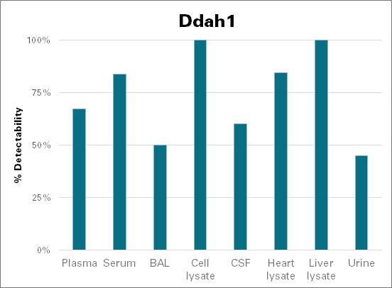 N(G),N(G)-dimethylarginine dimethylaminohydrolase 1 - mouse (Ddah1)