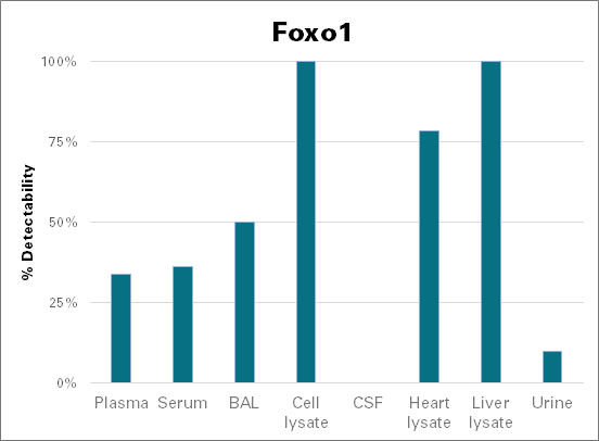 Forkhead box protein O1 - mouse (Foxo1)