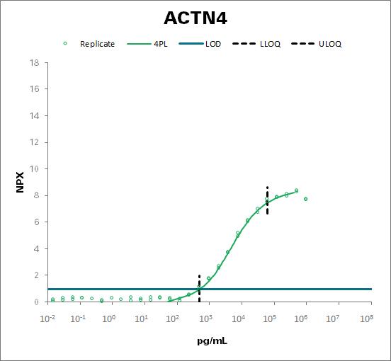 Alpha-actinin-4 (ACTN4)