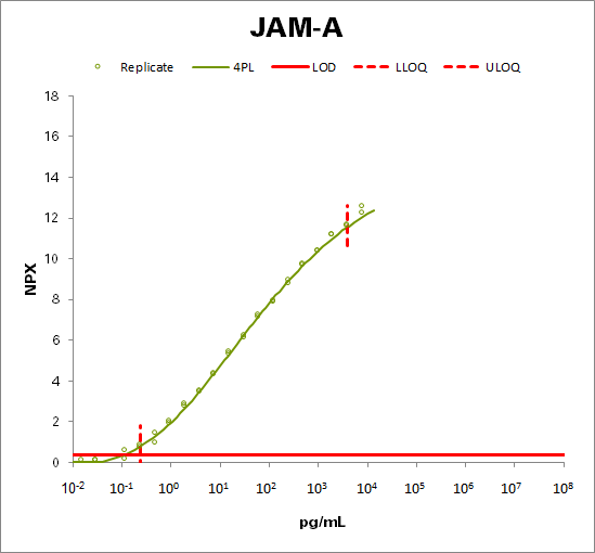 Junctional adhesion molecule A (JAM-A)
